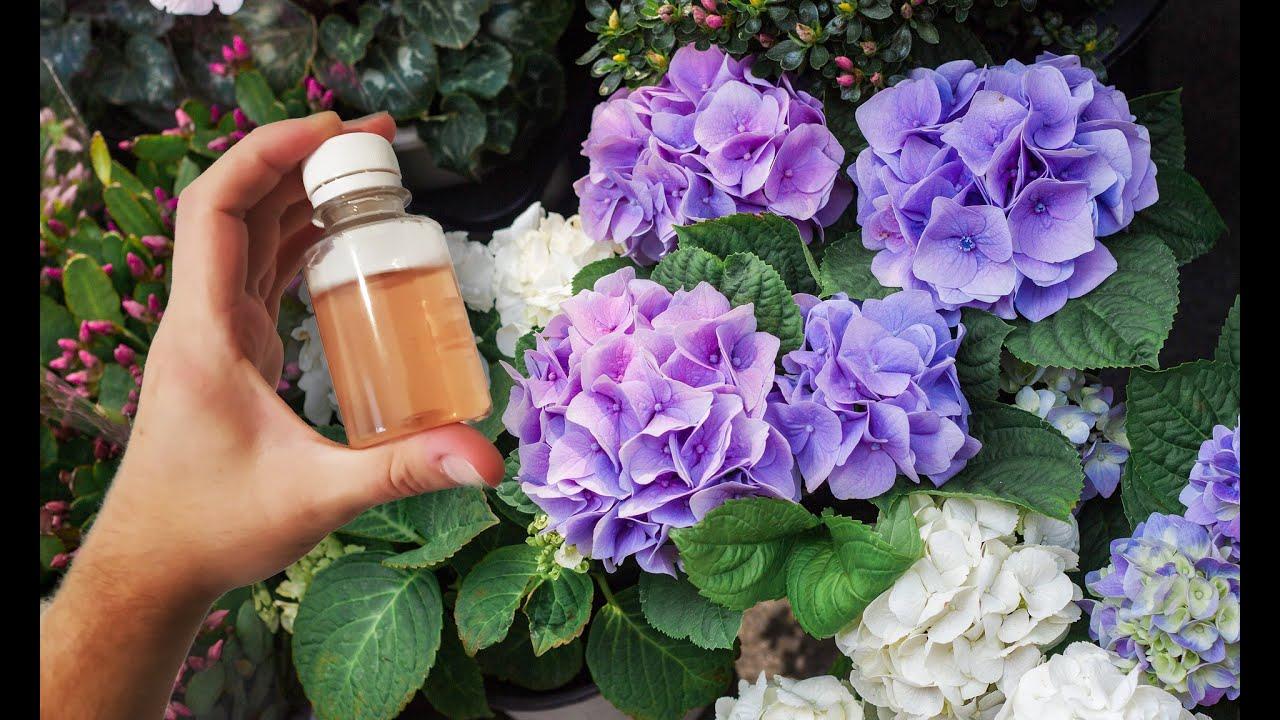 Все цветы пышно цветут от этой подкормки если один раз полить, настой для полива цветов!