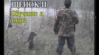 Щенок. Ч-2 Дресировка и охота с РОСом. Дрессировка русского охотничьего спаниеля