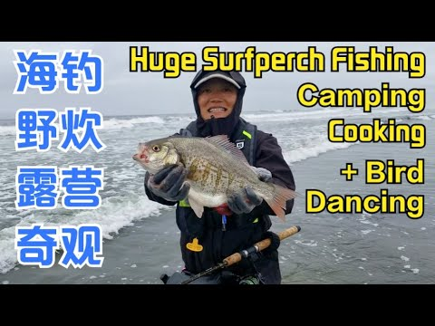 Best Surfperch Fishing Spots Of Washington Beach: Catch Biggest Redtail,Cook,Camp Tips In Westport