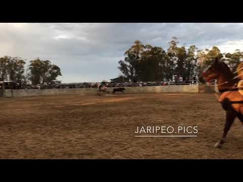 Jaripeo en Dixon,CA | 12/31/2017