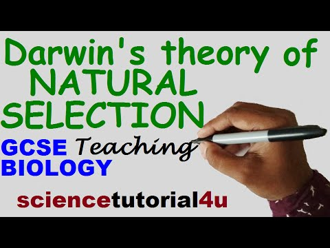 Natural Selection (Darwin's theory vs Lamarck's theory)