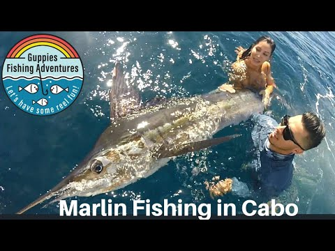 MARLIN FISHING IN CABO W/ PISCES SPORTSFISHING.