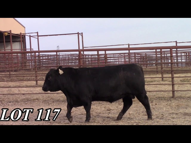 Mead Angus Farms Lot 117