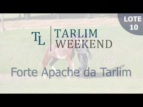 Lote 10 - Forte Apache da Tarlim (Potros Tarlim)