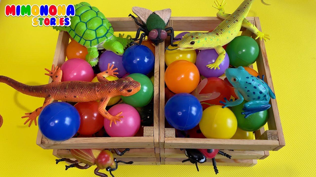 Insectos Anfibios Reptiles 🦎🐞 Nombres de animales para niños ✨ Mimonona Stories