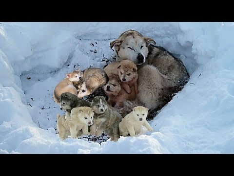 Rescue 9 Homeless Puppies and Mom Live In The Snow Will Make Warm Your Heart