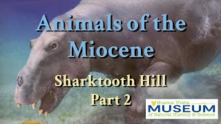 BVM Exhibits: Miocene Animals of Sharktooth Hill Part 2