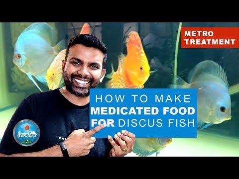 How To Make Medicated Food Discus Fish | Metro Treatment | Deworming  Discus Fish | HEX Treatment