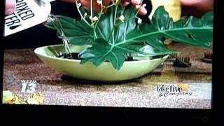 J und Tara Erstellen Sie eine ZEN-Blumen-und Steingarten... und ENTSPANNEN
