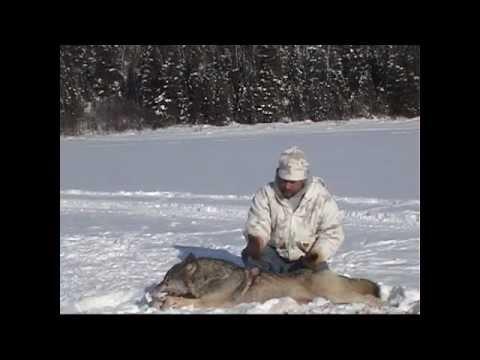 2012 Ontario Wolf Hunts With Nipigon River Bear Hunts