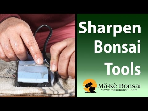 90) Bonsai Tools for Beginners The Sharpening Guide