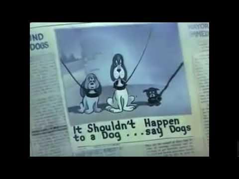 It Shouldn't Happen to a Dog!