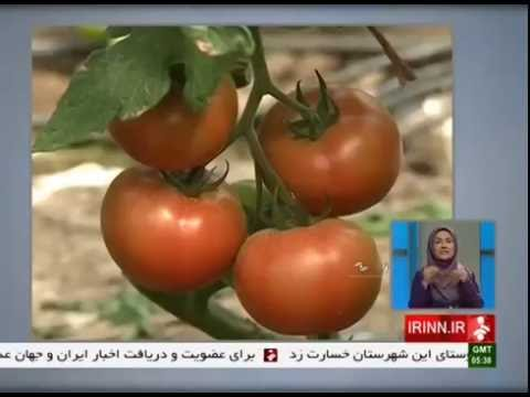 Iran Exporting Fruits & Vegetables to Russia, Alborz province صادرات ميوه و سبزيجات ايران به روسيه