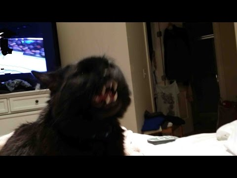 Cat Attacks Groomer Must See