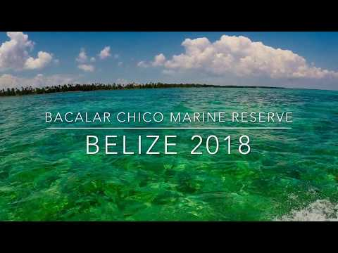 Belize 2018 Marine conservation expedition