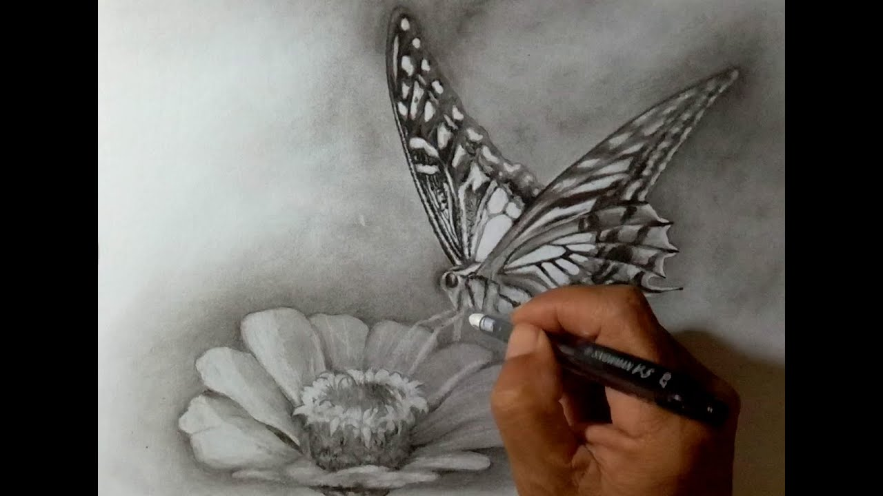 Cara mudah menggambar bunga dan kupu kupu menggunakan pensil
