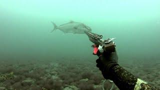 pescasub fuerteventura-enero buen comienzo