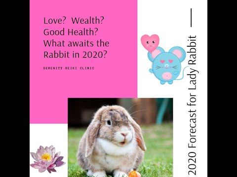 Rabbit Forecast For 2020 (Astrology For Female Rabbits)