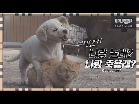 I'm Sorry, I Don't Love You EP1 (Tom and Jerry the sequel, Kong and Nabi)