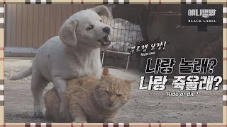 I\'m Sorry, I Don\'t Love You EP1 (Tom and Jerry the sequel, Kong and Nabi)