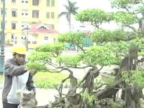 ITriển lãm cây cảnh Xuân Trường - Nam Định  tuandidongxt@gmail.com  phan2 .flv