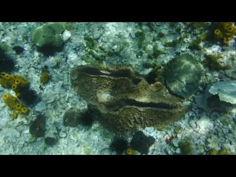 3 Baby Sea Urchin Anse Chastenet St Lucia
