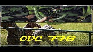 Odc-778-Swojskie ogórki szklarniowe w październiku,szklarnia ogrzewana,żyrafy 😉🌴