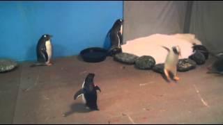 Hong Kong Theme Park Breeding Penguins