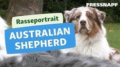 Australian Shepherd Rasseportrait   FRESSNAPF