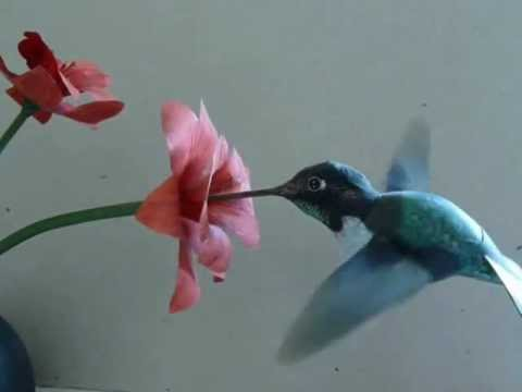 Solar powered Hummingbird