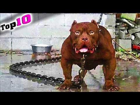 Top 10 Die Größten Haustiere Der Welt Youtube