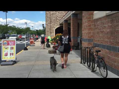 Off Leash K9 Trained Pit Bull and A 12 Year Old! Pit Bull Dog Training in DMV