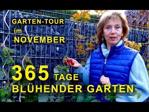 GARTEN-TOUR | kleiner Garten im November | 365 Tage blühender Garten