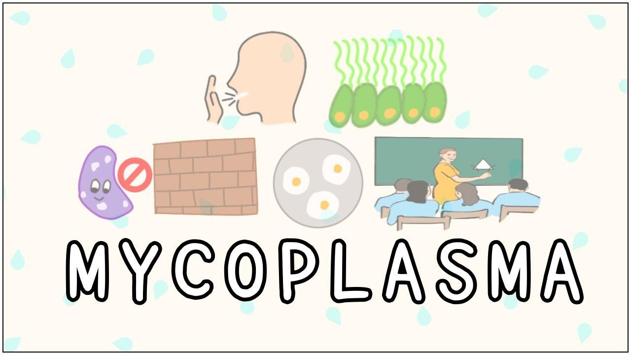 Mycoplasma szemölcsök - Condyloma acuminatum (nemi szervi szemölcs)