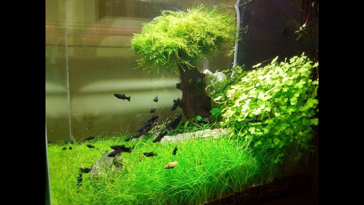 095. Pamiątka drzewka bonsai / bonsai tree / aquascaping ...