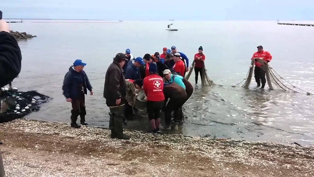 Manatee rescue success trinity bay chambers county texas for Trinity bay fishing report