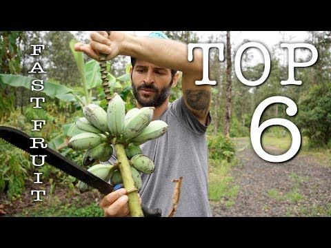 Fastest Producing Fruit Trees | Hawaii