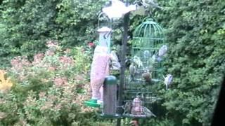 Busiest Bird Feeder In Uk?