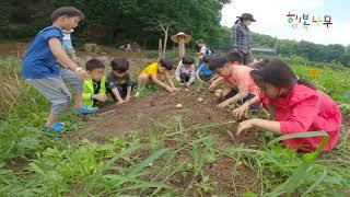 숲유치원 감자수확 텃밭 주말농장 이야기