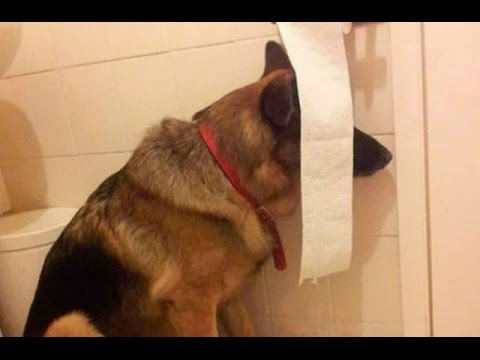 Funny And Cute Dogs Playing Hide And Seek Compilation -  Funniest Dog Videos 2016