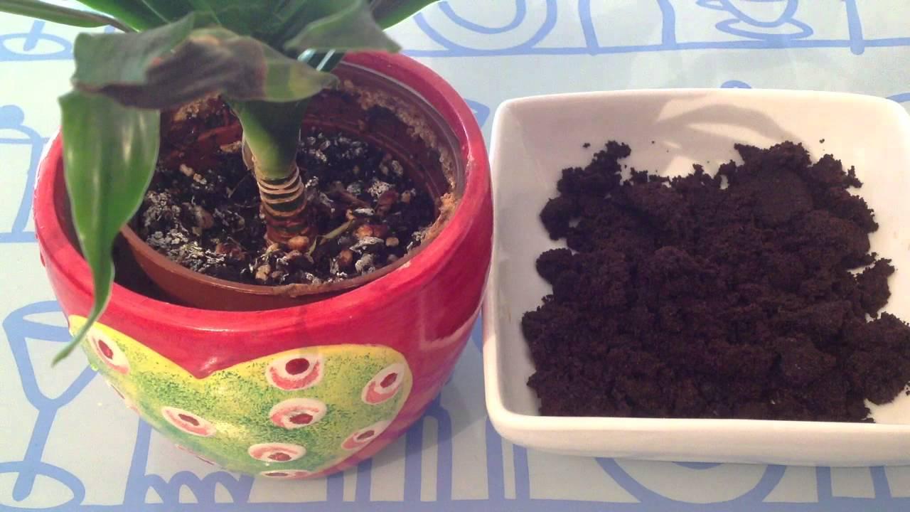Bicarbonate De Soude Contre Les Pucerons combattre les pucerons naturellement - astuce maison pour plantes  d'intérieur