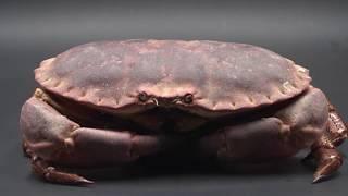 Depuis quand : le surimi - CANAL+ thumbnail