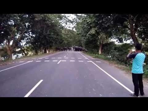 Wild eleplant crossing highway | Kaziranga | National Highway 37 | Assam | কাজিৰঙা