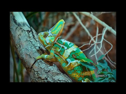 Top 5 Most Beautiful animal in the World