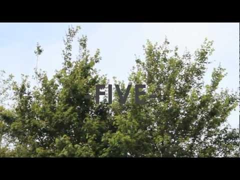 DEVON - FIVE