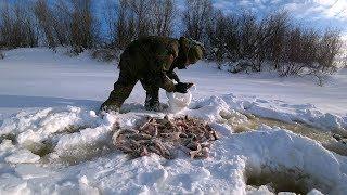 Рыбалка на севере Пол мешка рыбы с одной лунки Клев мечты Часть 2
