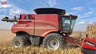 Case IH 8250 AXIAL-FLOW Combine Harvesting Corn
