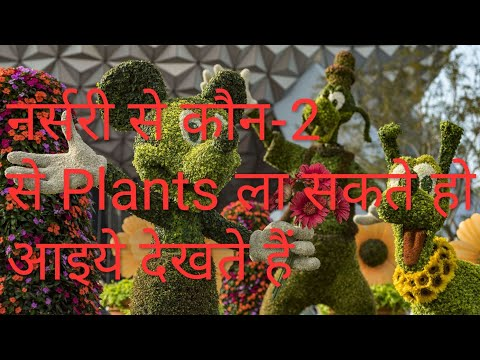Name of the Hardy plants for beginners// Best👍💯 summer flowering plants