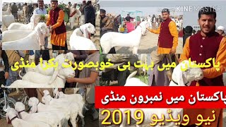 Download - mandi in karachi video, DidClip me