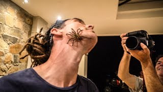 ATTACKED BY BABOON SPIDER!